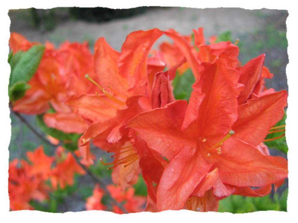orangeparc.jpg