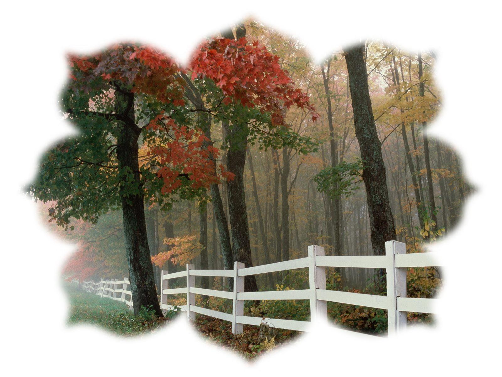 automne1.jpg