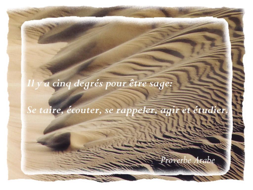 proverbearabe1007.jpg