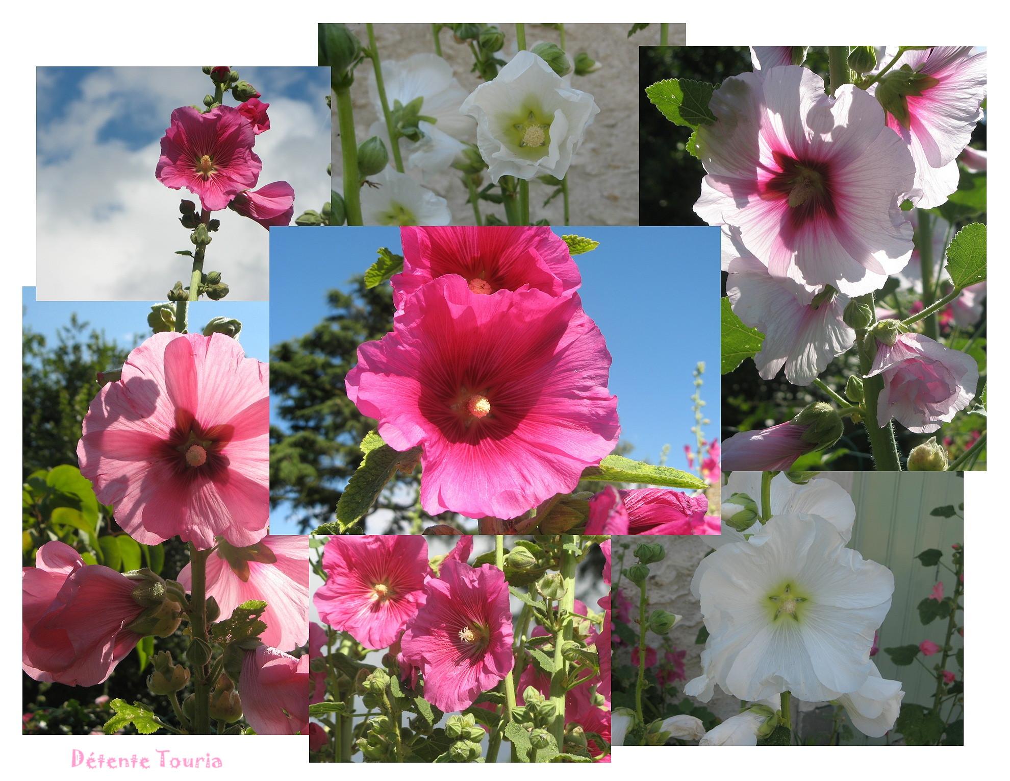 rosestremieres.jpg