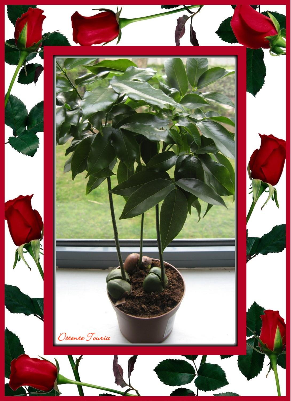 planteverte1.jpg
