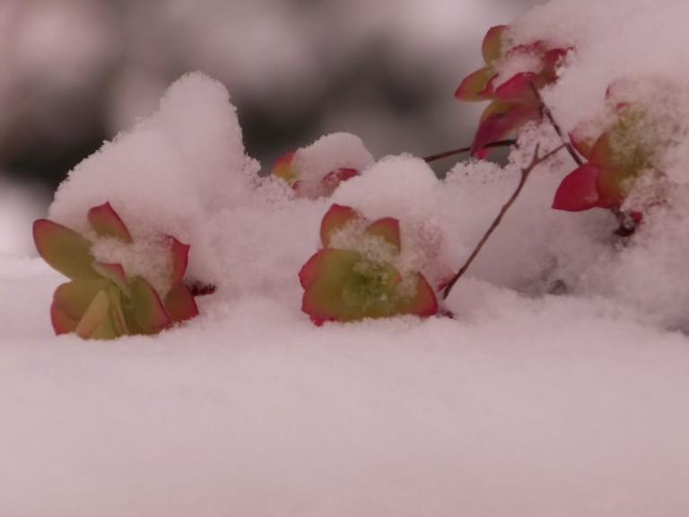 neige2013.6