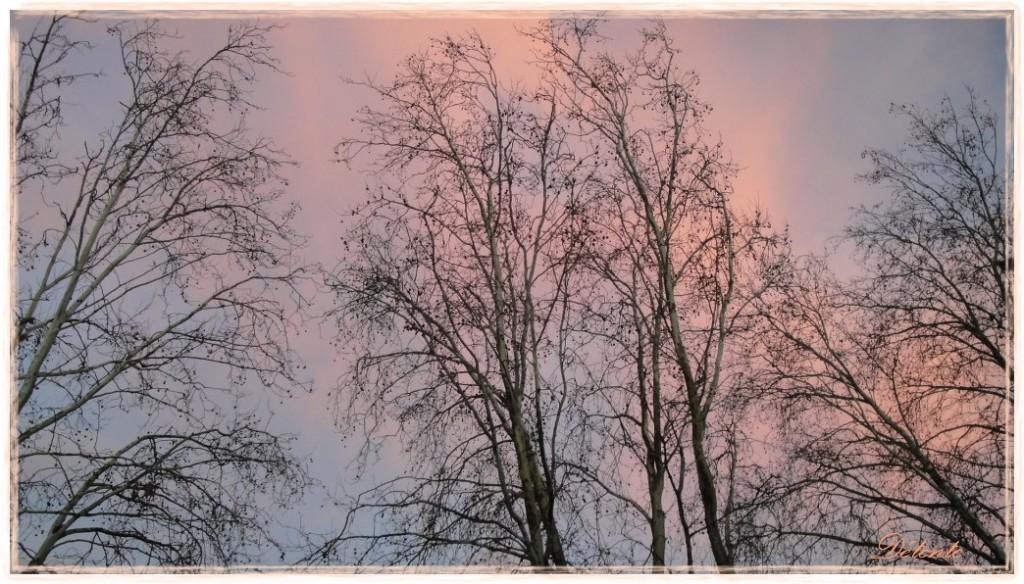 hiver41