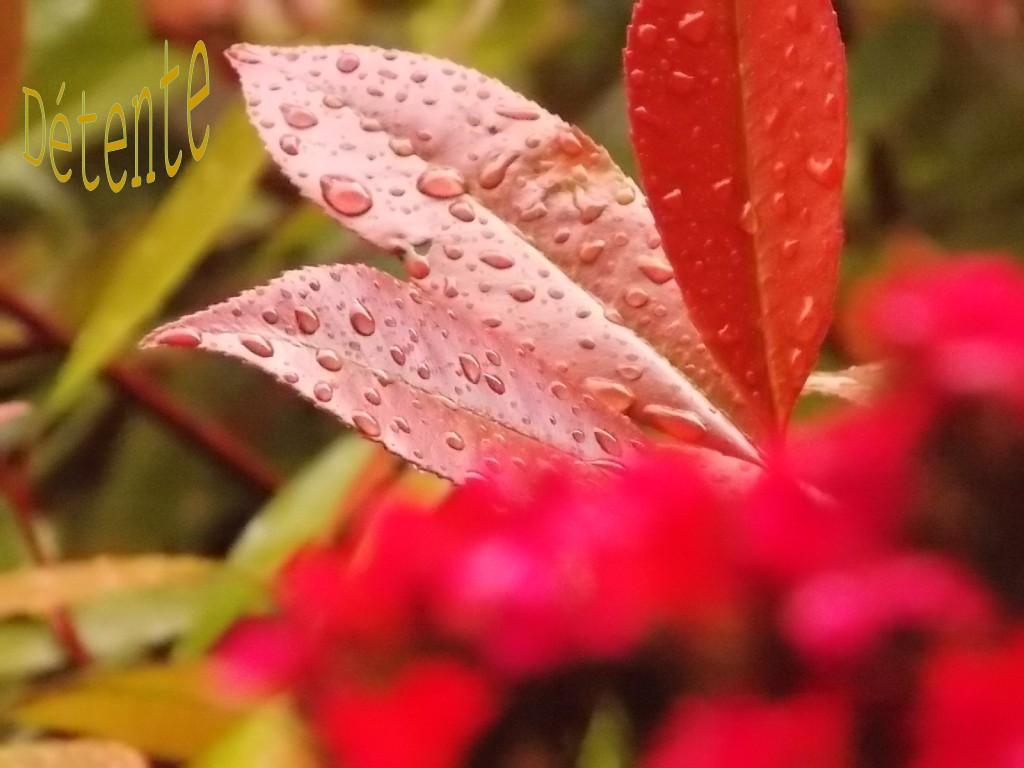 pluie-printemps