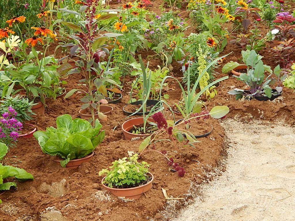 Je fais un rêve... dans Fêtes jardinieramateur131