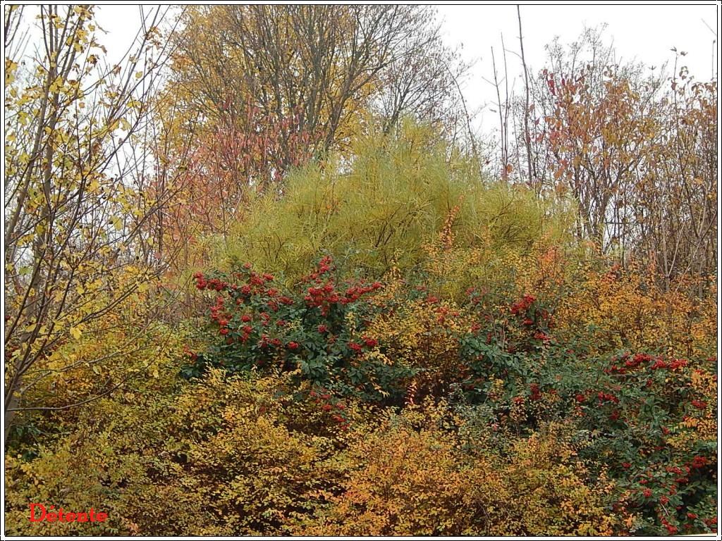 automne2013-5