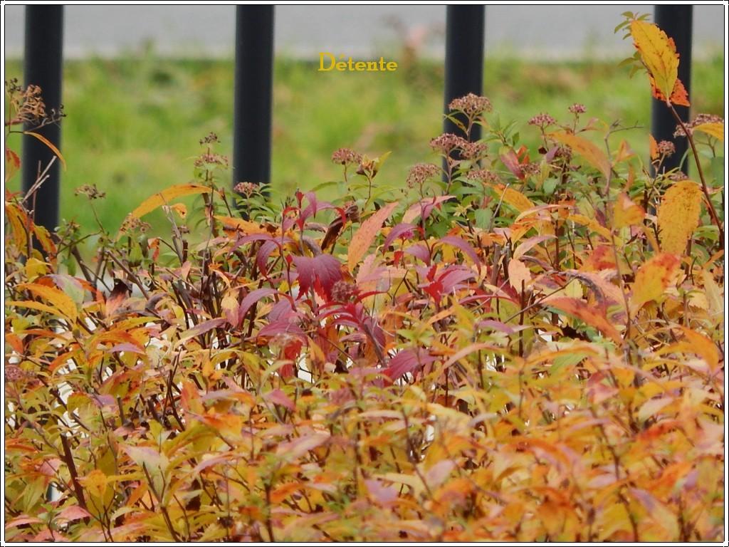 automne2013-6
