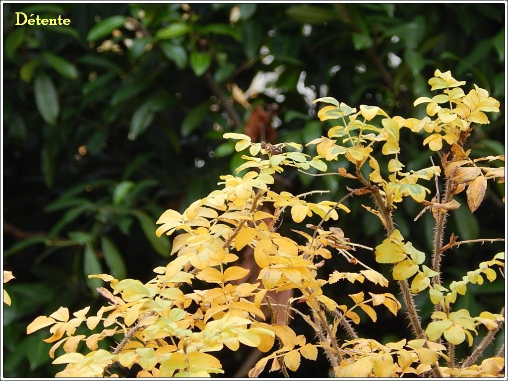 automne3012-4