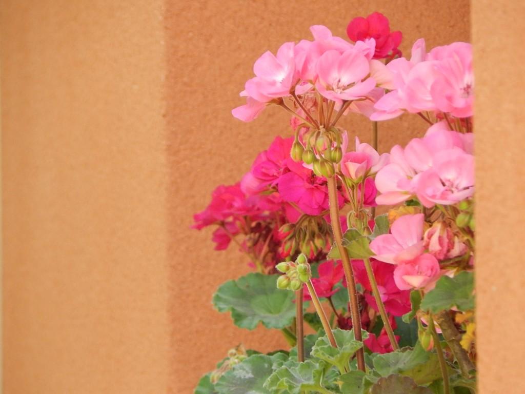 balcon fleurs
