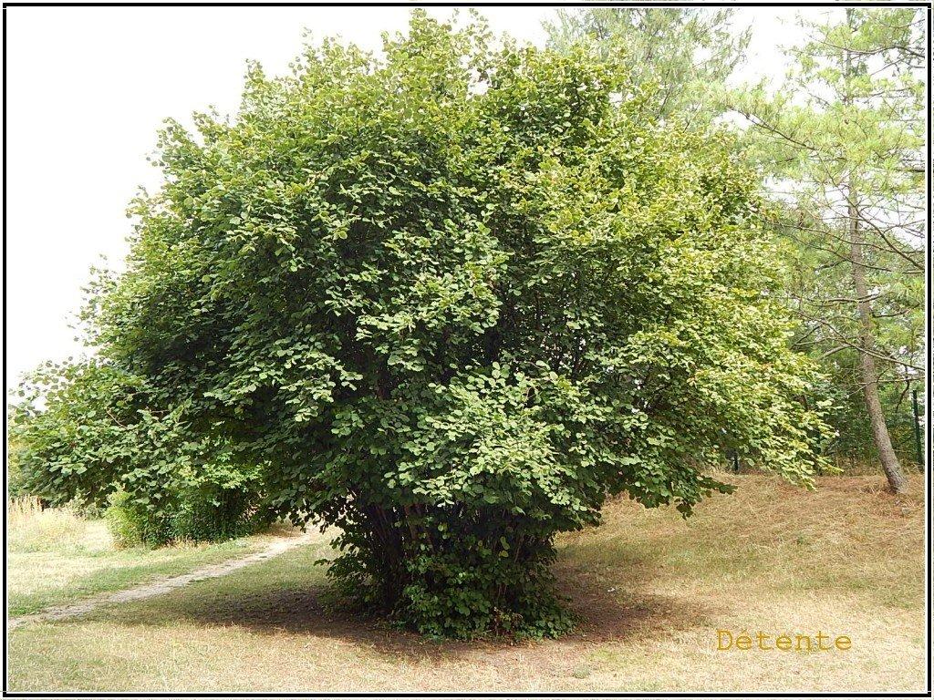 arbrecentral2015