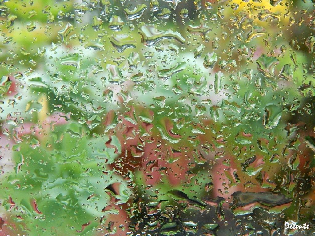 pluievitre