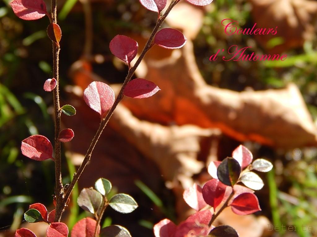 couleursd'automne