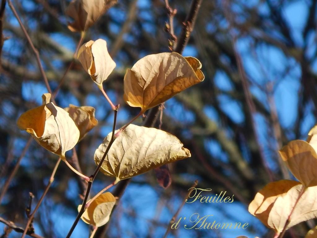 feuillesd'automne